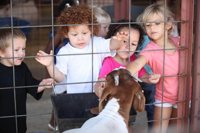 Students petting a goat