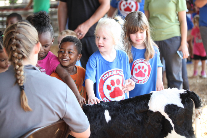 Students petting a cow